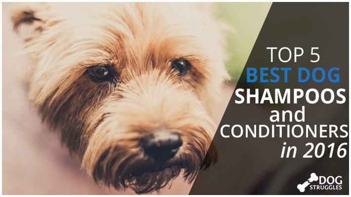 dog shampoo featured