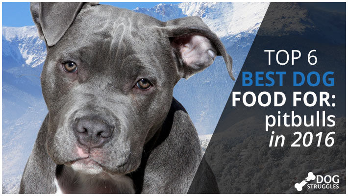best food for pitbulls featured on dogstruggles