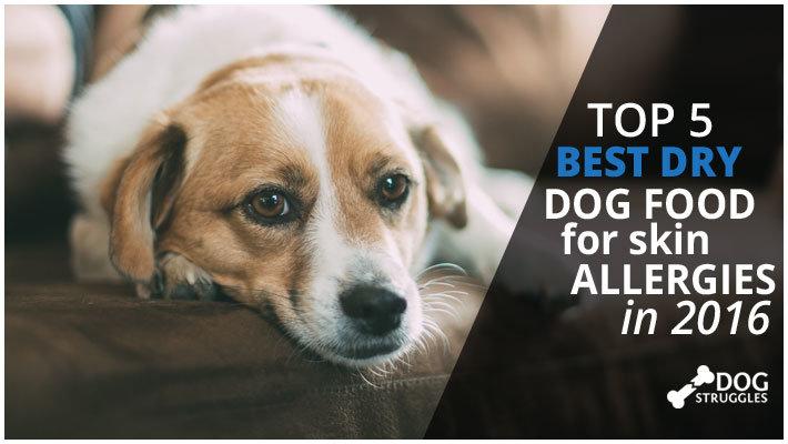 Best Dry Dog Food For Goldendoodles