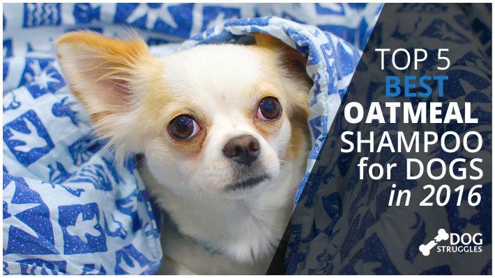 dog shampoo oatmeal template