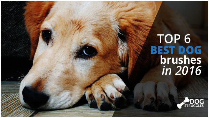 featured dog brushes image on dogstruggles