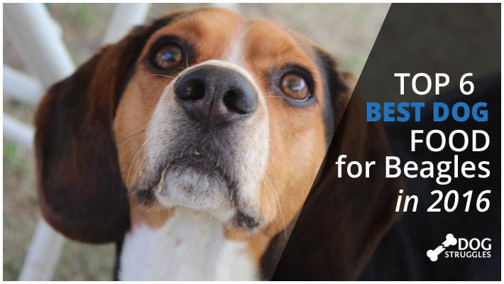 featured beagle food