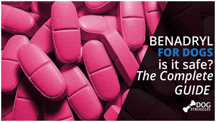 Benadryl For Dogs Is It Safe The Complet Guide Dogstruggles