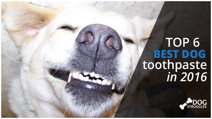 smiling dog on dogstruggles