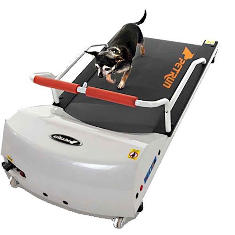 dog treadmills reviews