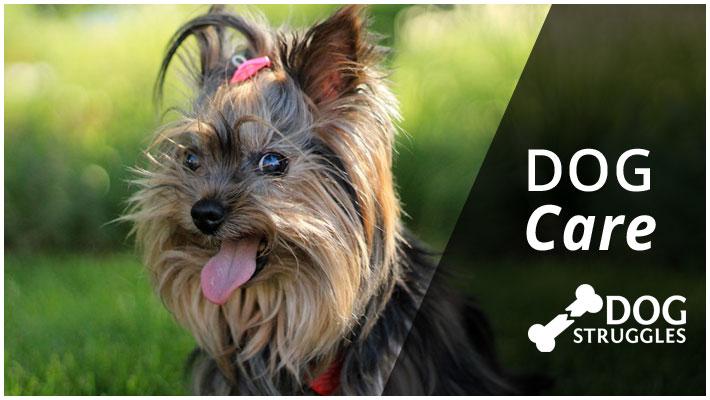 dog care category