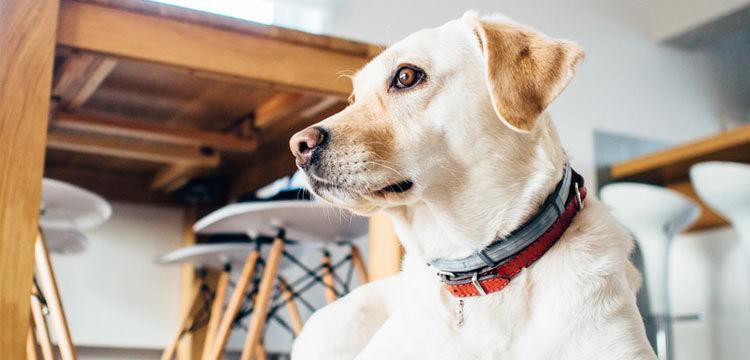 dog home on dogstruggles