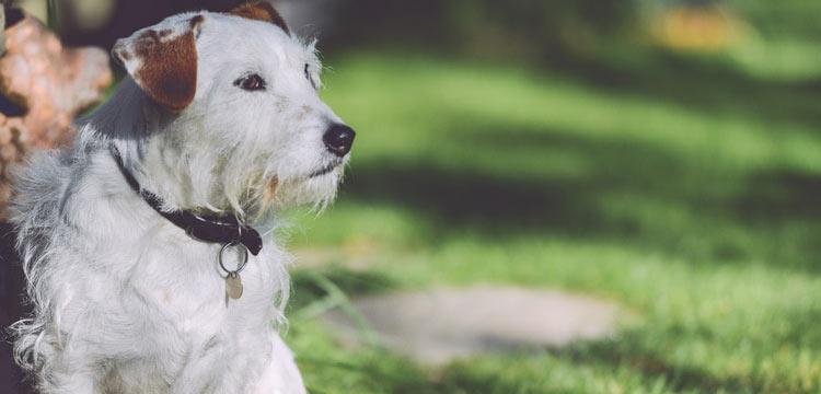 dog thinking on dogstruggles