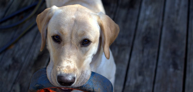 Dog Yeast Infection Food To Avoid