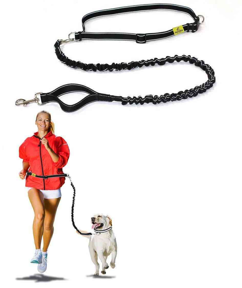 best leash for running with dog