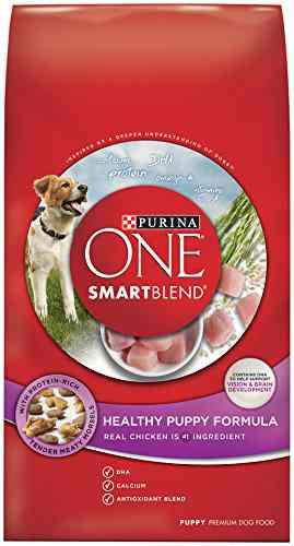 Food For Huskies Needs To Be Grain Free