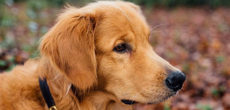 dog autumn on dogstruggles