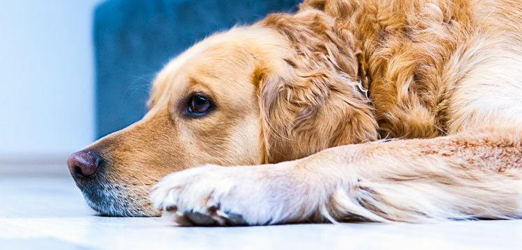 dog bored on dogstruggles