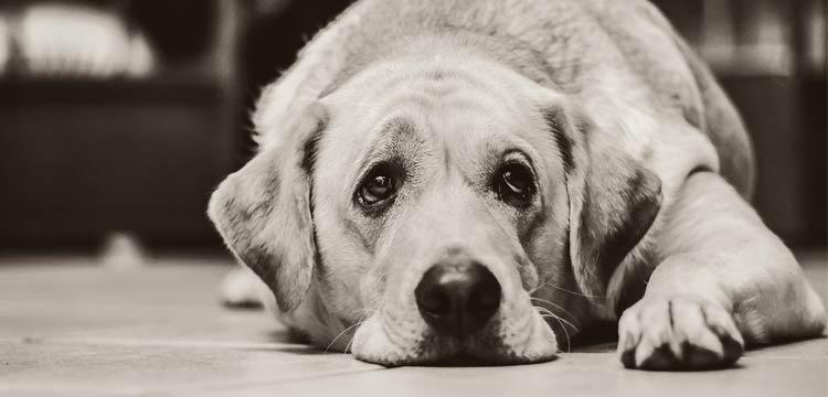 struggles-upset-dog-pain