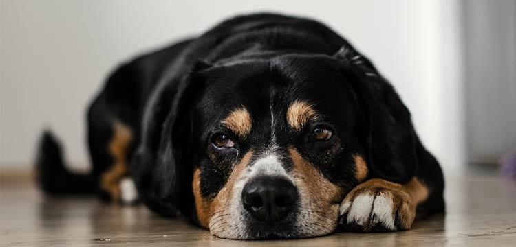 struggles-upset-dog