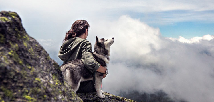 pomsky on mountain