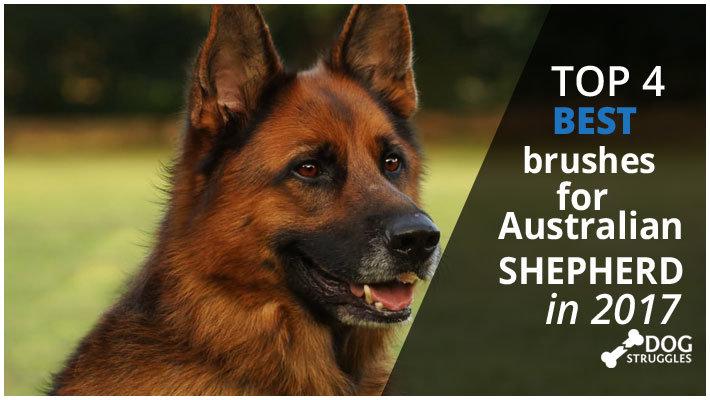 Best Brush For Australian Cattle Dog