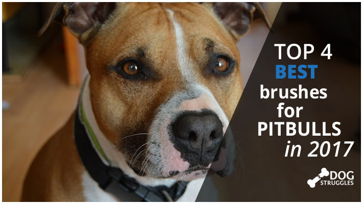Top 4 Best Brushes For Pitbulls In 2017 Dogstruggles