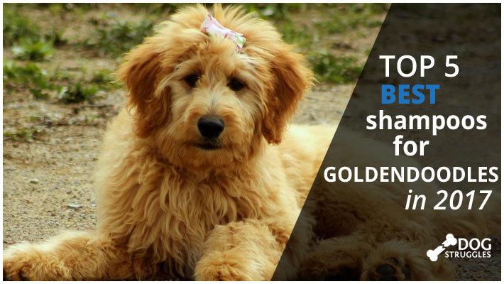 Best Dog Shampoo For Doodles