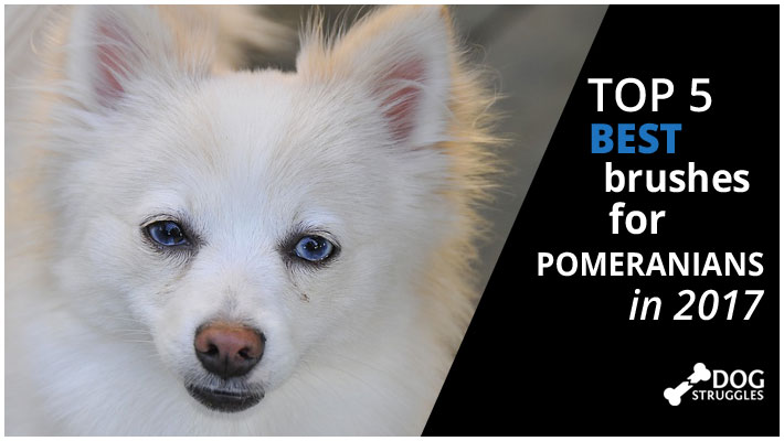 What is the Best Dog Food For a Pomeranian