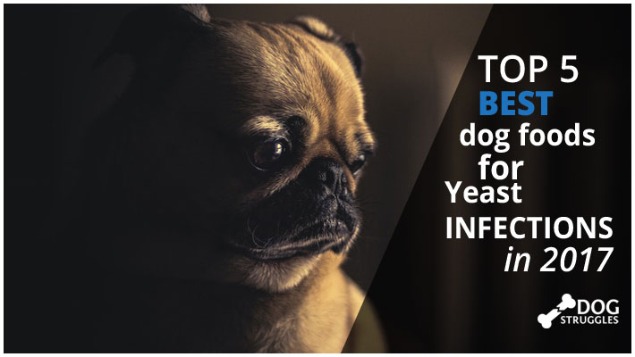 What Dog Food Is Good For Dogs With Yeast Infections