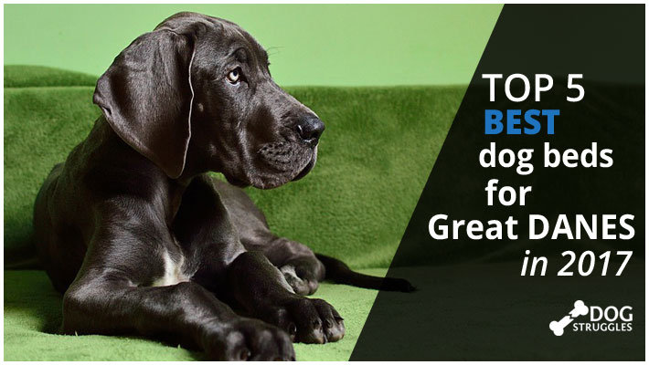 Top 5 Best Dog Beds For Great Danes In 2017 Dogstruggles