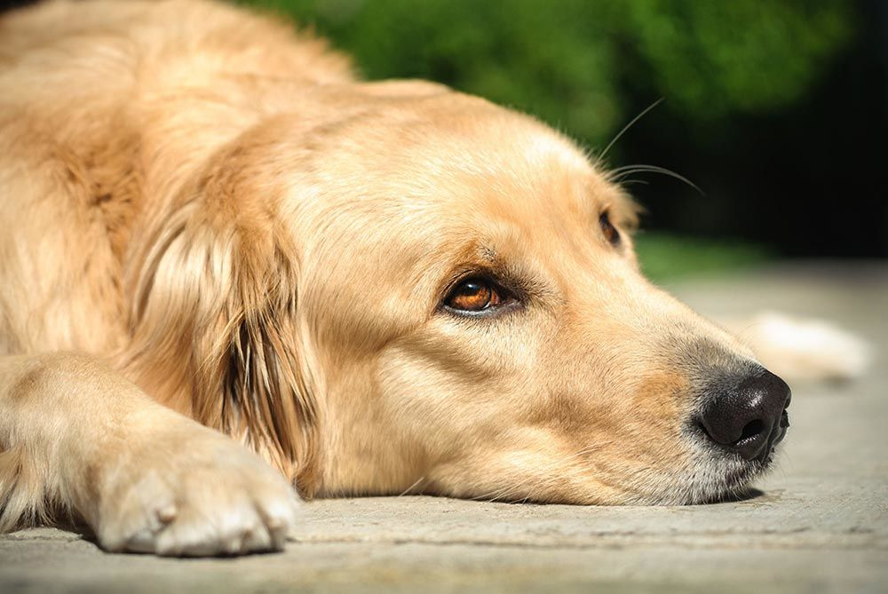 Dogs With Ibd What Food Is Best