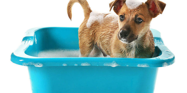 puppy in a blue tub