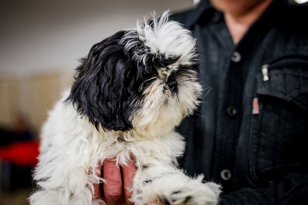 Top 5 Best Dog Clippers For Lhasa Apso In 2018