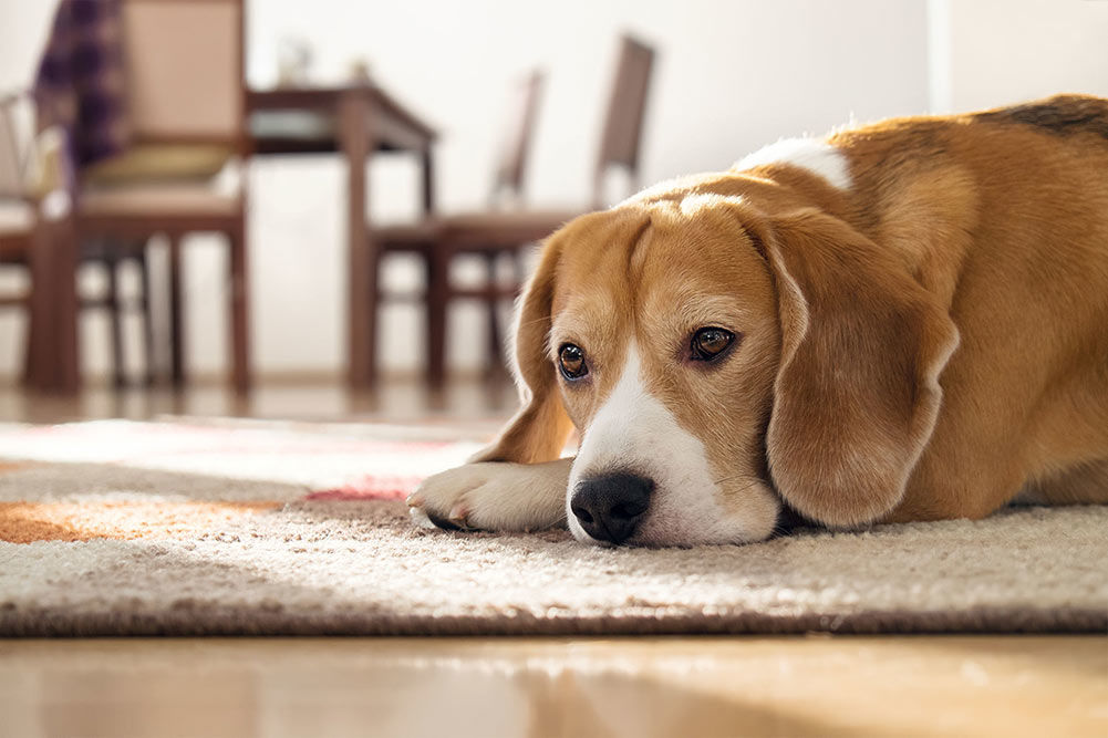 Top 5 Best Dog Foods For Skin Allergies In 2019 Dogstruggles
