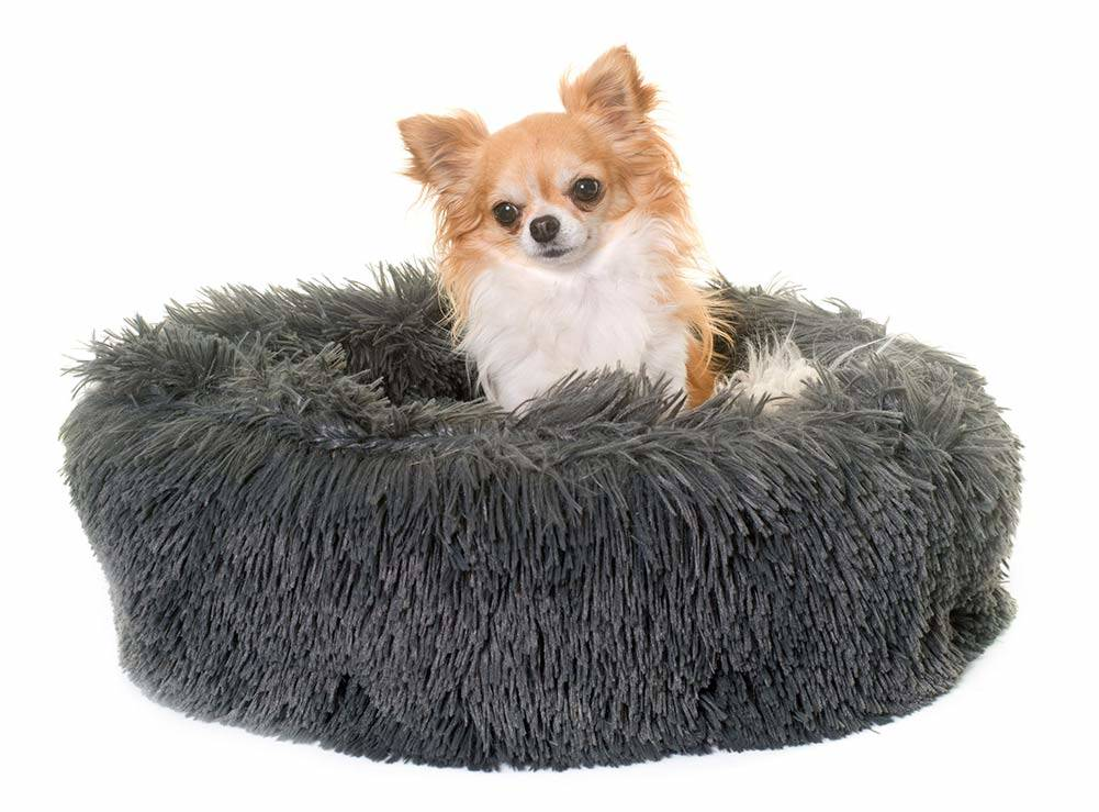 Top 5 Best Dog Beds For Chihuahuas In 2019 Dogstruggles