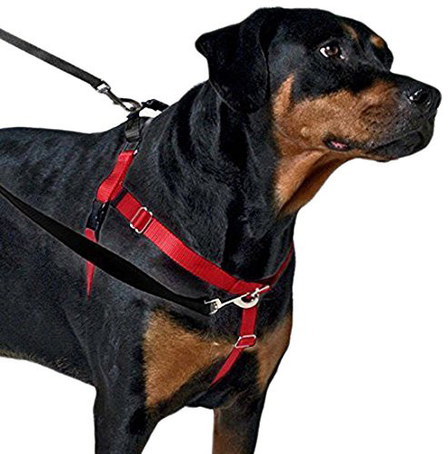 We Review the Best 8 Dog Harnesses for Every Kind of Dog ...