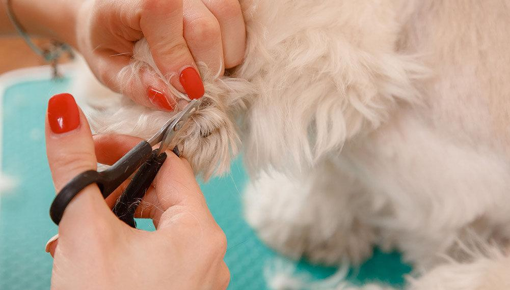 Top 5 Best Dog Clippers For Shih Tzus In 2019 Dogstruggles