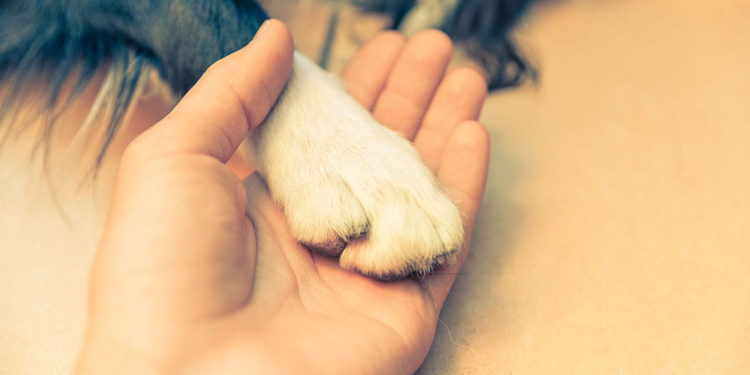paw in a mans hand