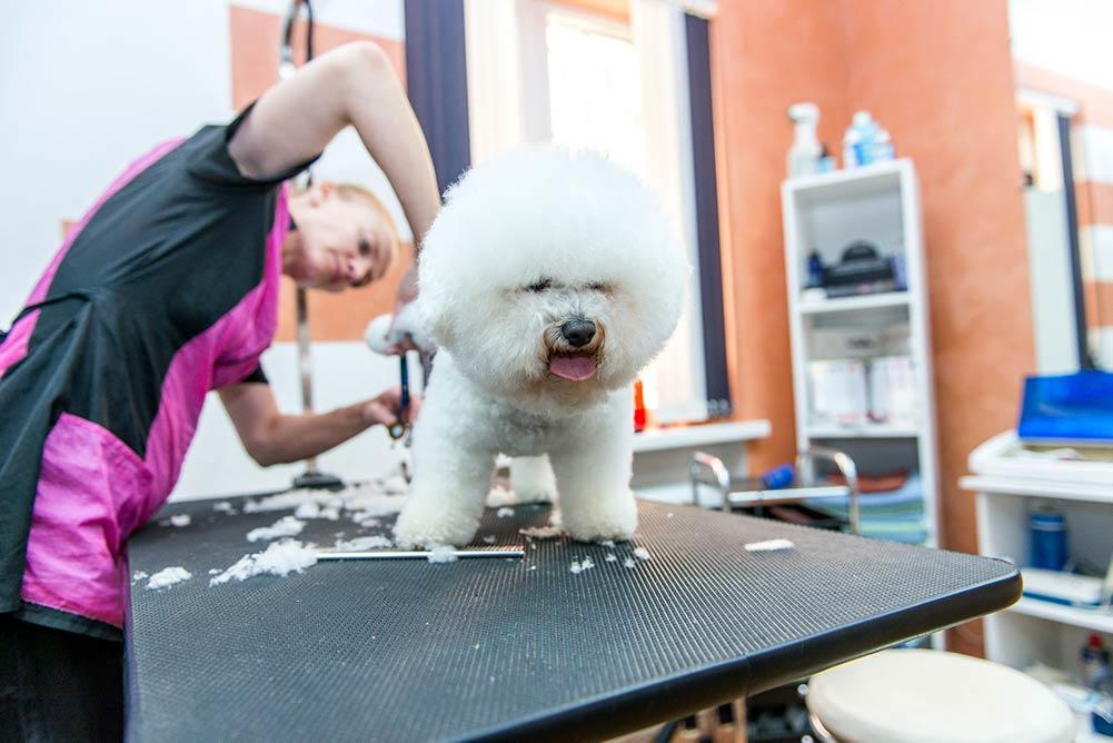 Top 5 Best Dog Clippers For Bichon Frise In 2019 Reviews