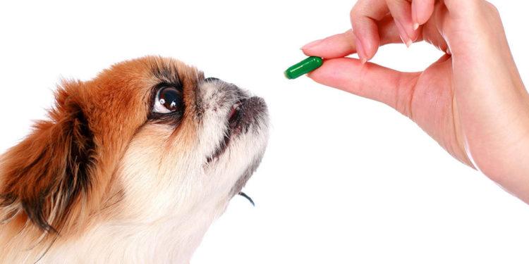 dog being fed green glucosamine tablet