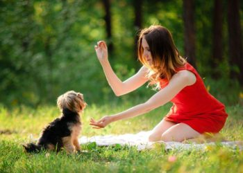 woman in red giving a treat to a puppy while training