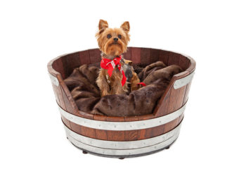 yorkie sitting in dog bed
