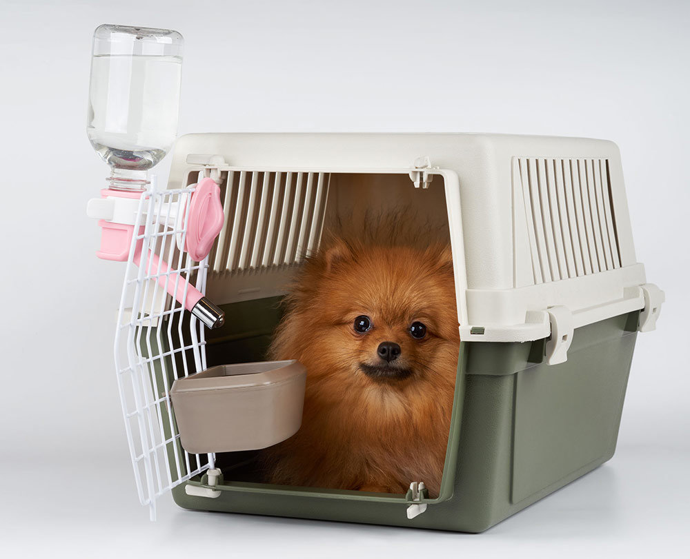 Top 5 Best Dog Crates For Pomeranians Detailed Reviews