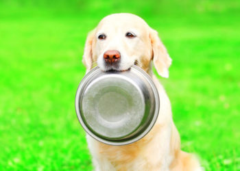 dog holding its food bowl in its mouth