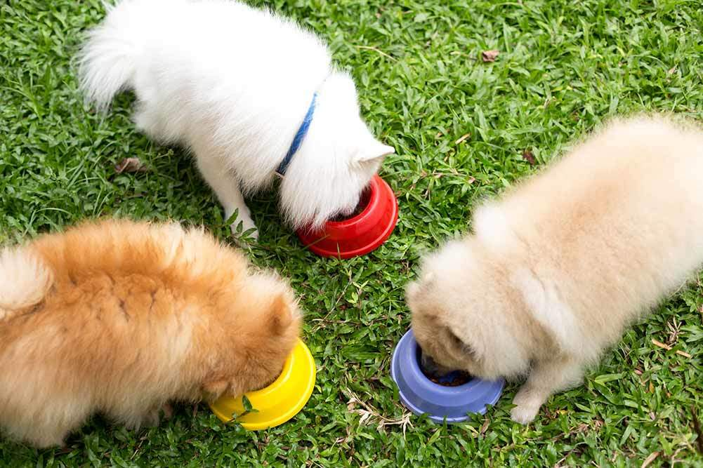 Top 5 Best Dog Foods For Pomeranians Detailed Reviews