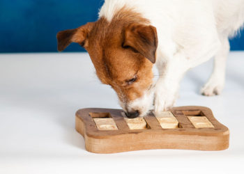 Dog sniffing out a treat in an interactive dog toy