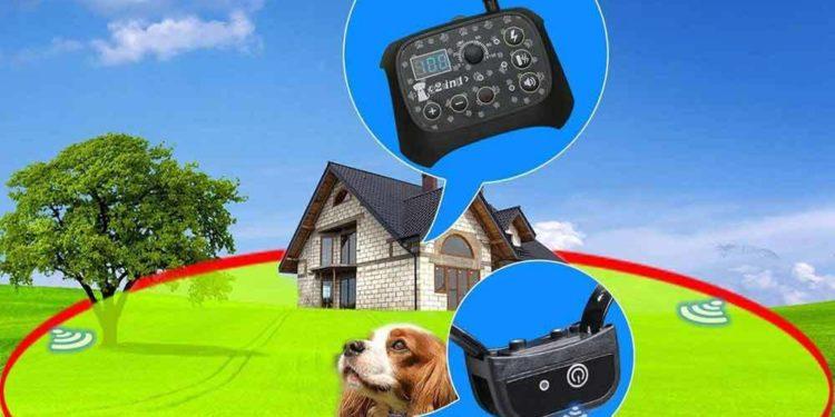 dog wearing wireless collar around his home