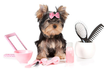 yorkie dog surrounded by pink grooming products