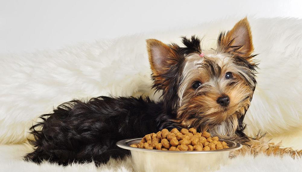 Top 5 Best Dog Foods For Yorkies Dog Struggles