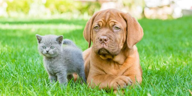 dog and cat sitting together outside on the grass