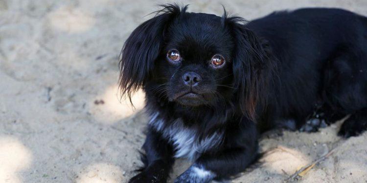 black dog on the sand