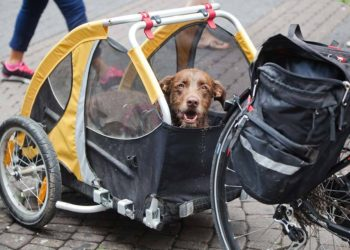dog sitting in a yellow and black bike trailer