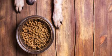 kibble in a bowl on a wooden floor with dogs paws around it
