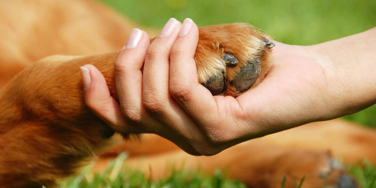 golden dog paw in a ladys hand